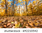 landscape of autumn forest road ... | Shutterstock . vector #692210542