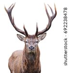 Mature Red Deer Stag Isolated...