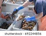 Two Lobster Men Sort The...