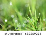 drops of dew on the grass on... | Shutterstock . vector #692269216