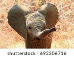 an adorable baby african... | Shutterstock . vector #692306716