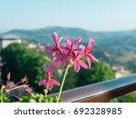 purple flower against san...   Shutterstock . vector #692328985
