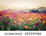 landscape of nature background...   Shutterstock . vector #692359486