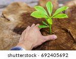 planted with a male hand of new ... | Shutterstock . vector #692405692