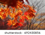 Season Of Beautiful Autumn...