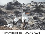 espanola island  galapagos   ca.... | Shutterstock . vector #692437195