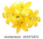 lily flower | Shutterstock . vector #692471872