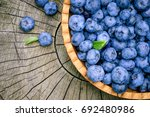 freshly picked blueberries in... | Shutterstock . vector #692480986