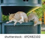 Squirrel On A Trashcan