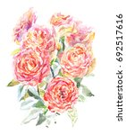 beautiful watercolor roses | Shutterstock . vector #692517616