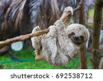 sloths in rescue centre in... | Shutterstock . vector #692538712