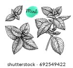 mint set. isolated on white... | Shutterstock .eps vector #692549422