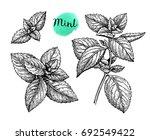 mint set. isolated on white... | Shutterstock .eps vector #692549422