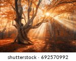 magical old tree with sun rays... | Shutterstock . vector #692570992