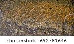 gold bubbles | Shutterstock . vector #692781646