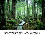 Small photo of Promenade on a Abies forest
