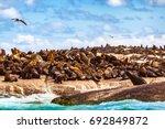Wild Sea Lions On The Stony...