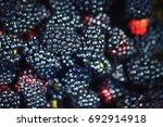 delicious berries | Shutterstock . vector #692914918