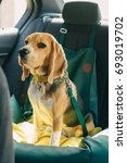 safety of dogs in the car  | Shutterstock . vector #693019702
