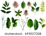 field flowers and leaves | Shutterstock . vector #693027208