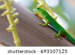 lizard on palm leaves tropical... | Shutterstock . vector #693107125