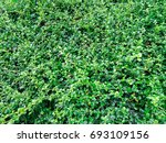 green leaf. | Shutterstock . vector #693109156