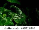 green leaf caladium texture in...   Shutterstock . vector #693112048