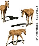 three views of foal with shadows