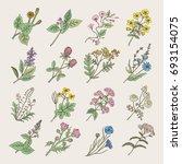 botanical herbs and flowers.... | Shutterstock . vector #693154075