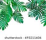 green leaves of monstera... | Shutterstock . vector #693211606
