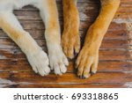 White And Brown Dog Paws Just...