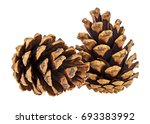 two brown pine cones on a white ... | Shutterstock . vector #693383992
