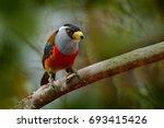 toucan barbet  semnornis...   Shutterstock . vector #693415426