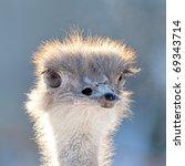 curious ostrich portrait | Shutterstock . vector #69343714