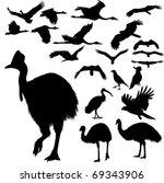 Australian Birds Vector...