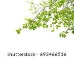 green leaves on a white... | Shutterstock . vector #693466516