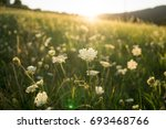 sunset on meadow with hills and ... | Shutterstock . vector #693468766