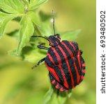 brightly coloured european... | Shutterstock . vector #693480502