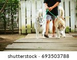 Stock photo dogs walk together in leash with owner in the park both of siberian husky with owner 693503788