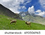 sheeps with beautiful view on... | Shutterstock . vector #693506965
