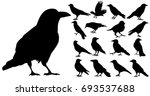 vector  isolated silhouette of... | Shutterstock .eps vector #693537688