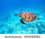 green sea turtle in shallow... | Shutterstock . vector #693585082