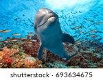 dolphin underwater on school of ... | Shutterstock . vector #693634675