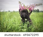 Stock photo funny dog in a wreath from wild flowers in the field 693672295