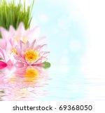 beautiful pink lotus flower...   Shutterstock . vector #69368050