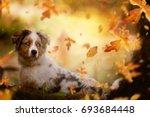 young australian shepherd ... | Shutterstock . vector #693684448