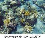 tropical seashore underwater... | Shutterstock . vector #693786535