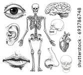 Human Biology  Anatomy...