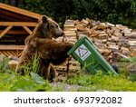 Small photo of Brown bear looking into trash bin with sigh compost able (Komposterbart)