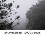 forested mountain in fog with... | Shutterstock . vector #693795406